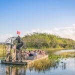 Park Narodowy Everglades – aligatory na wyciągnięcie ręki
