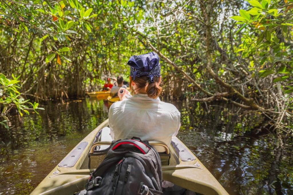 EVERGLADES, FLORIDA, USA - AUGUST 31: Tourist kayaking in mangrove forest on August 31, 2014 in Everglades, Florida, USA.