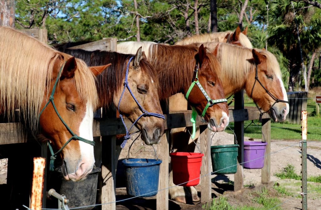 Horses Lined Up