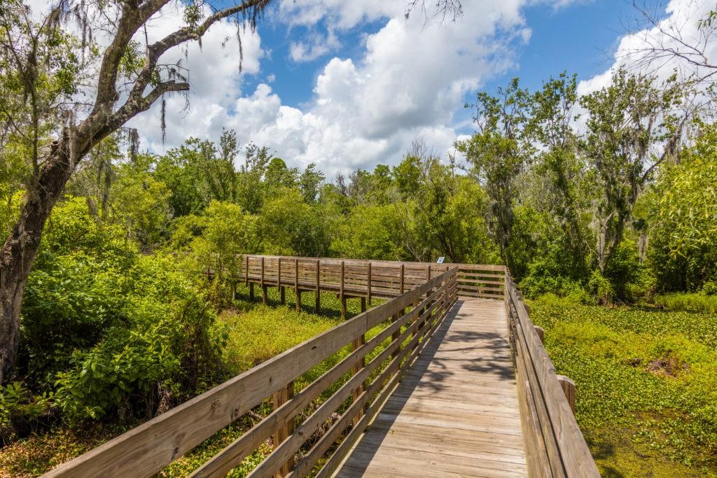 Wood Boardwalk in Lettuce Lake Regional Park in Hillsborough County in Tampa Florida