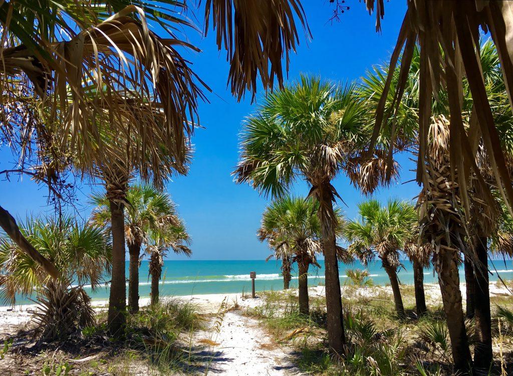 Caladesi Island, Florida, USA - July 27, 2016: Path access to Caladesi Island Beach between Palms trees in Florida
